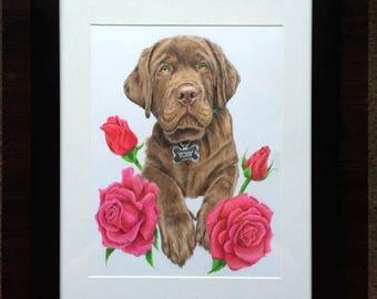 "Custom 9x12"" - Coloured Pet Portrait"