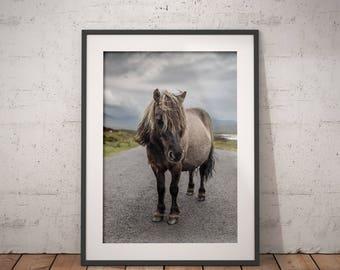 Shetland Pony II - Fine Art Photographic Print