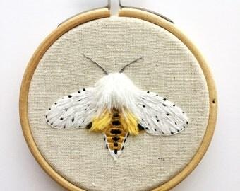 Yellow White Fluffy Moth