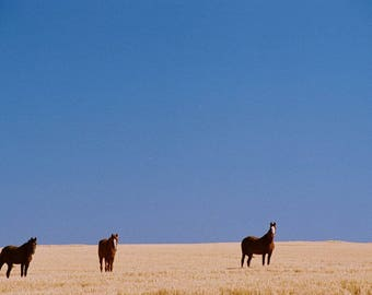Horses in the High Lonesome series