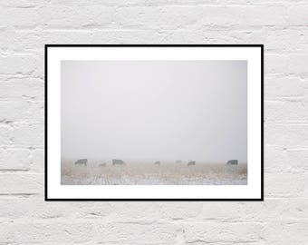 Cow Printable, Farm Animals Printable, Rustic Wall Art, Farm Decor, Foggy Landscape Photo, Digital Download, Winter Prints, Snow Photo