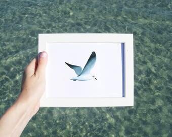 Seagull - Art, drawing, print, illustration