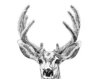 Deer Illustration Print