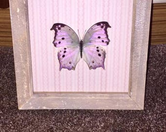 A iridescent Mother of pearl butterfly mounted