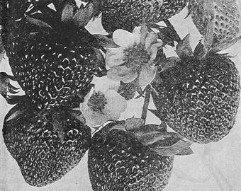 Minimoon 2017 | Roll-On Perfume Oil | Strawberries, fig, honey, tomato leaf, and violet