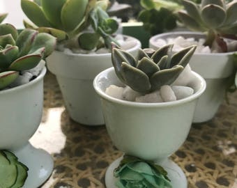Mini Succulent Favors