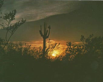 Vintage 1980s Postcard Saguaro Skeleton Desert Ghosts Scenic Sunset View Majestic Southwestern Scene Photochrome Card Postally Unused