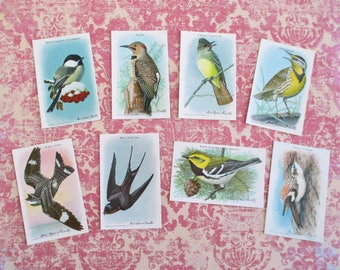 Eight Vintage Arm & Hammer Bird Trading Cards