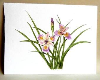 Pacific Coast Iris watercolor painting