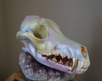 meditation 07 // Opalescent Painted Coyote Skull // Iridescent Taxidermy Coyote Skull // OOAK