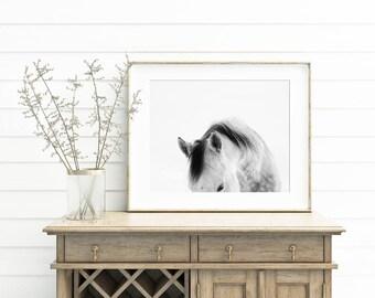 Modern White Horse Photograph   White on White Horse Art Print   PHYSICAL PRINT