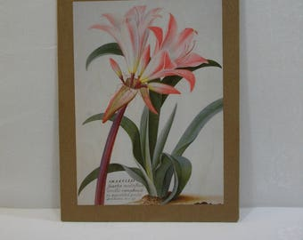 French Country Rustic Wall Art / Amaryllis Wall Art / Recycled Book Plate Wall Art Ready To Hang or Frame