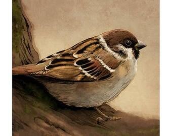Tree Sparrow colour art print
