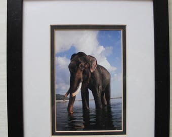 ASIAN ELEPHANT - Rajan takes a bath- Framed under glass with hook and stand.