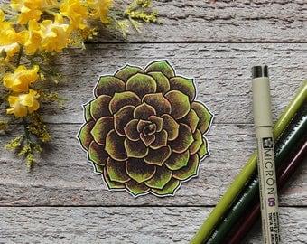 Hand Drawn Succulent Waterproof Sticker