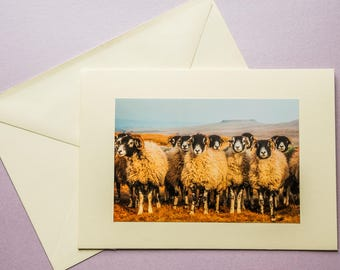 Swaleies! - all occasion greeting card