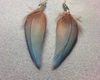 Turquoise and dark red greenwinged macaw feather earrings adorned with turquoise and pink Czech glass beads.