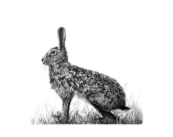 Poster Print. The Watchful Hare