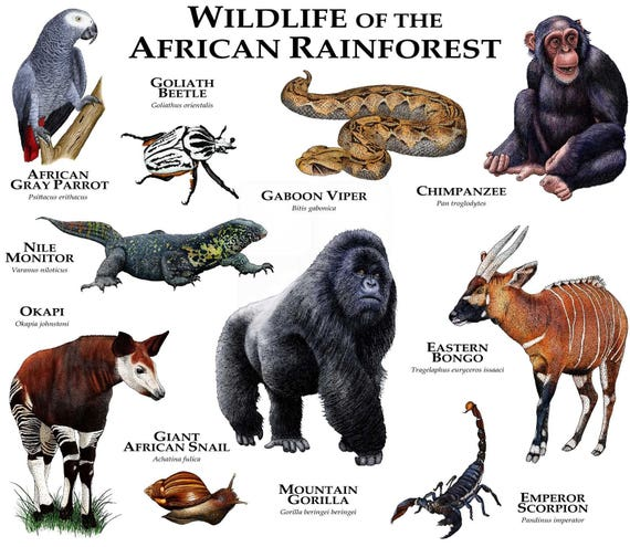 Animals of the African Rainforest