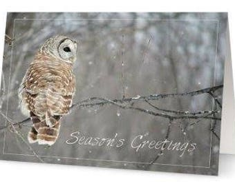 Barred Owl Holiday Card - Single card only
