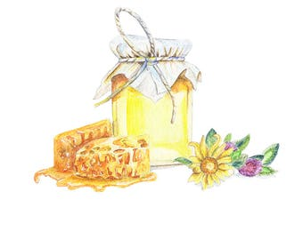 Honeypot with honeycombs and clover watercolor painting