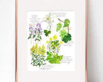 Luminous Mysteries Botanical Rosary print