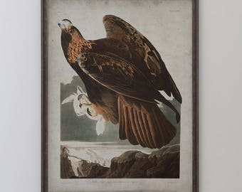 Golden Eagle: John James Audubon, Birds of America, Circa 1820's - Vintage Art Print