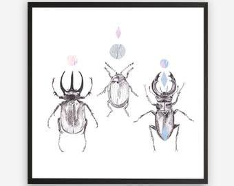 Beetles Print