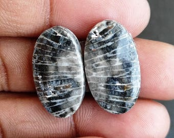 New year sale 20cts  Black Coral Pair natural Gemstone ,cabochon , smooth, oval  shape,  21x12x3mm  size, AM103