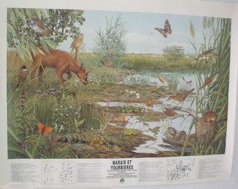 """Poster """"swamp bog"""""""