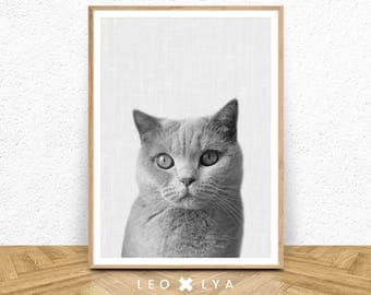 Cat Print, Kitten Print, Nursery Wall Art, Baby Animal, Large Poster, Black and White, Modern Minimalist Decor, Cat Photo, Digital Download