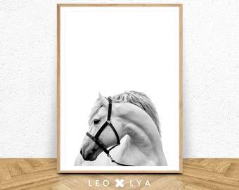Horse Print, Horse Photography, Horse Printable Art, Horse Photo, Horse Decor, White Horse, Horse Art, White Horse Art, Horse Black White