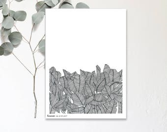 Banana - Drawing Illustration hand - Botanic poster - print in limited and numbered - monocotyledonous