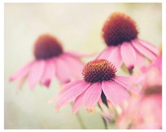 flower photography, pink flower, nature photography, flower wall art, floral art print, romantic home decor, fine art photography, 11x14