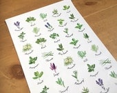Herb stickers, A4 sheet of 35 gloss stickers