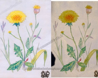 Flower dandelion print Flower Iridescent Shimmer Nm60 Painting