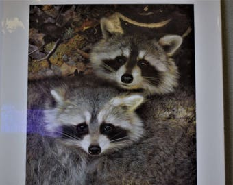 Carl Brenders Raccoons Yin and Yang Limited Edition Print