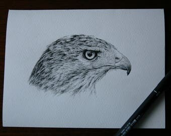 Original pen and ink Buzzard