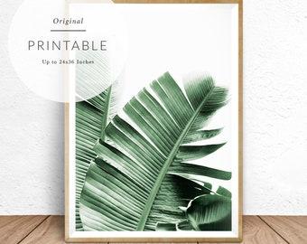 Banana Leaves, Tropical Decor, Tropical Print, Banana Leaf Print, Tropical Decor, Minimalist Plant Photography, Green and White, Banana Leaf