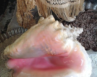 Large, pearlised conch shell