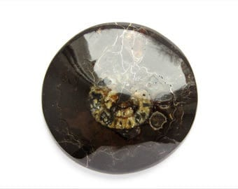 Ammonite cabochon 39x39x4 mm