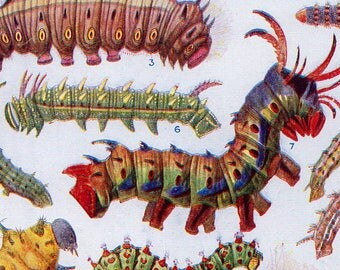 Set of Three Vintage Caterpillar Charts