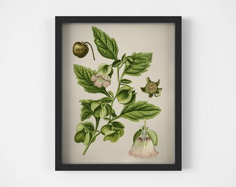 "Botanical print, Antique flower print, Plant prints, Art prints, Floral print vintage, Illustration, Botanical printables, 16x20"" wall art"