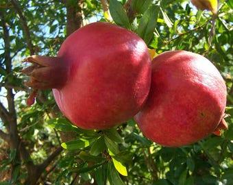 200 Punica Granatum Seeds, Pomegranate seeds, Fruit Seeds
