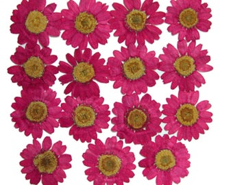Pressed flowers, pink marguerite 15pcs for floral art, craft, card making, jewellery making, scrapbooking