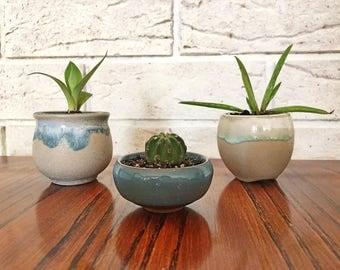 Succulent & Cactus Planter Pot Arangement Display Set of 3