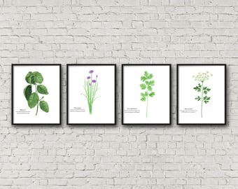 FRAMED Botanical Herb Watercolor Paintings with Names, Kitchen Art, Fine Art Print, Herb Painting, Botanical Art, Gardener Gift, Garden