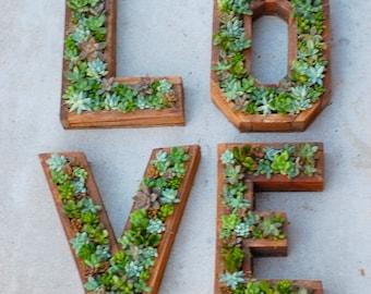 LOVE Succulent Letter Set