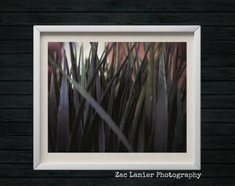 Landscape Photography, Grass Photo, Green Photo, Calming Photo, Calming Decor, Zen Decor, Close Up Photography, Nature Inspired, Macro