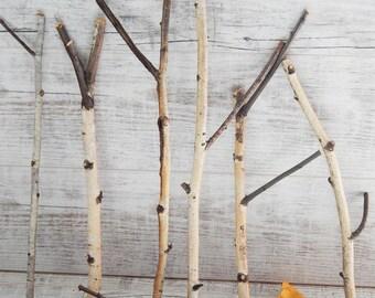Birch Branches, 7 Thin Birch Sticks, Birch Twigs, Natural Decor, Forest Supplies
